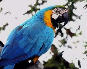 CITES: Protección de especies amenazadas