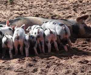 Evolución de la legislación sobre animales