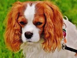 Responsabilidad del propietario por daños producidos por animales y mascotas