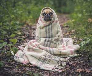 Responsabilidad veterinaria por negligencia, reclamaciones y denuncias