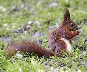 UICN: Lista Roja de Especies Amenazadas