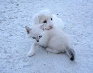 Enfermedades del aparato urogenital en perros y gatos