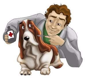 Enfermedades del sistema nervioso en perros y gatos