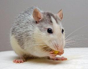 Ritmos circadianos: reloj biológico en animales