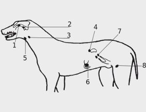 Sistema endocrino de los animales, conceptos generales