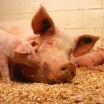 Reproducción de los animales, vertebrados e invertebrados