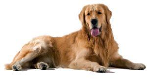Animales utilizados en terapias