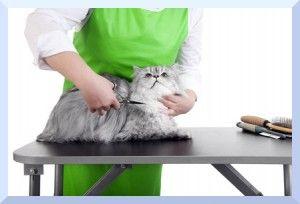 Estudios, cursos y carreras especializados en manejo de animales