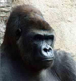 Etología animal, comportamiento de los animales