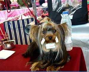 Limpieza e higiene mascotas y otros animales