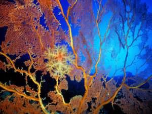Origen de los animales, teorías simbiótica, sincicial o celularización y la postulación colonial