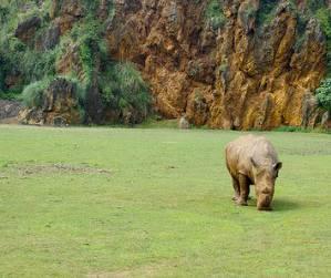 Parque de Cabarceno, los animales salvajes transitan en similibertad
