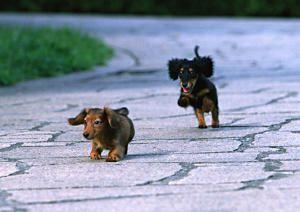 Planes preventivos, seguros mascotas, igualas veterinarias