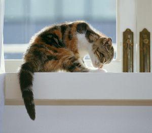 Problemas de comportamiento en mascotas