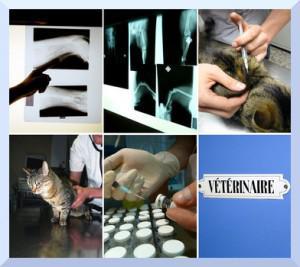 Salud de los animales, su evolución.