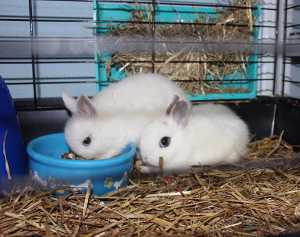 Alimentación de los animales, clasificación de los animales según su alimentación