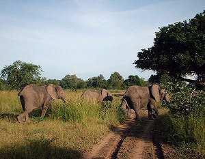 Población de animales, tipos, relaciones intraespecíficas