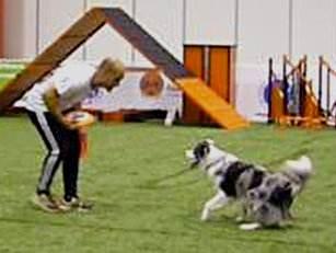 Curso adiestramiento canino, curso adiestrador canino