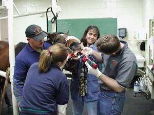 Curso de Auxiliar de Clínica Ecuestre, Curso de asitente técnico veterinario ecuestre