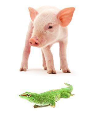 animales homeotermos, animales poiquilotermos