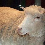 Clonación animal: tipos, ventajas y desventajas