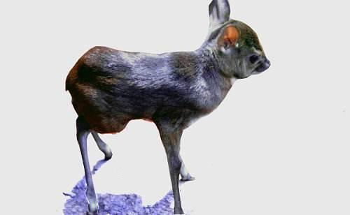 Animales más pequeños del mundo