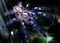 Araña metálica