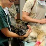 Diferentes opciones en carrera de veterinaria para los amantes de los animales