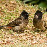 Especies invasoras, un peligro para la fauna y flora autóctona