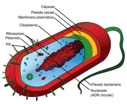 Estructura de las bacterias, partes