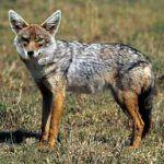 Animales carnívoros, tercer eslabón en la cadena trófica
