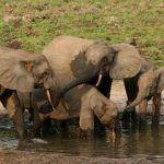 Animales herbívoros, segundo eslabón en la cadena trófica
