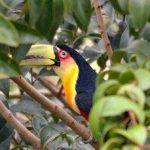 Animales frugívoros, ejemplos de los que se alimentan de fruta