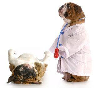 Mejores cursos de animales domésticos