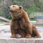 Algunos de los mejores zoológicos de España que debes conocer