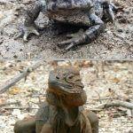 Diferencias entre anfibios y reptiles, aspectos más relevantes