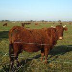 Domesticación animal, proceso o etapas en los animales