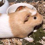 Estrés en animales, causas, factores que lo inducen y fases