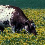 Utilización de antibióticos en ganado, efectos. Actualidad y  perspectivas