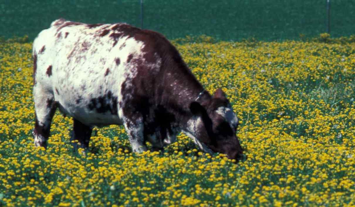 Utilización de antibióticos en ganado
