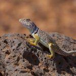 Animales del desierto, cómo son, ejemplos y adaptaciones