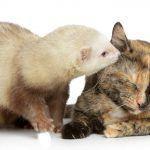 Por qué debes tener más de una mascota en casa