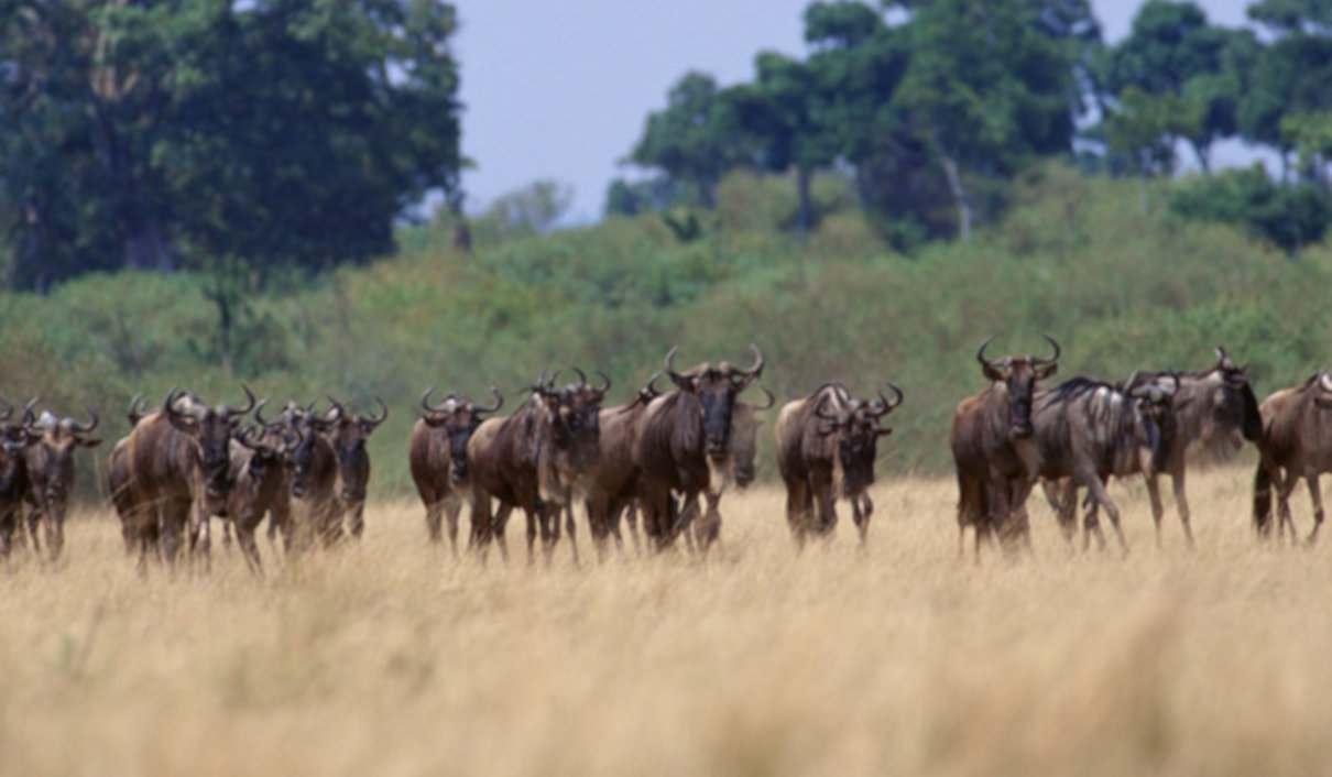 Migración animales