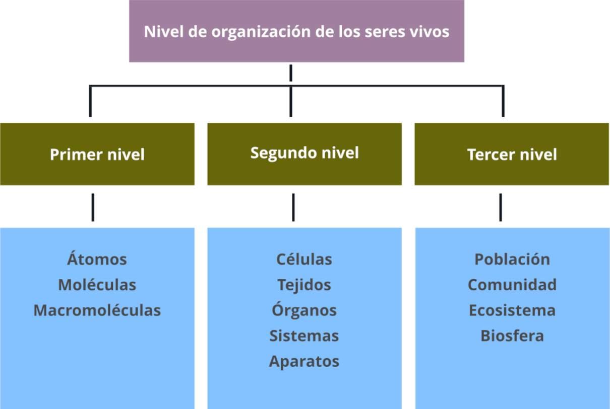 Niveles De Organización De Los Seres Vivos Ordenados Según Jerarquía