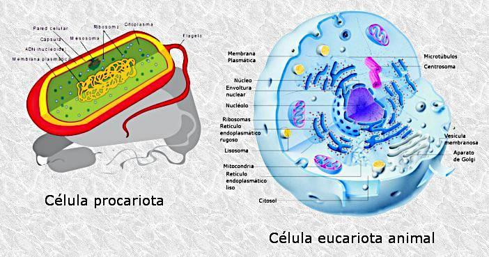 Tipos de células, procariotas y eucariotas