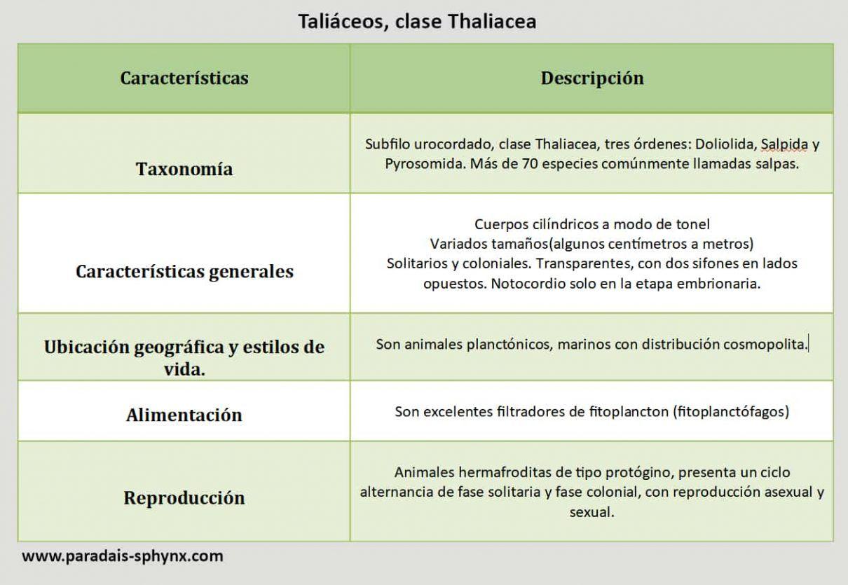 Taliáceos, clase Thaliacea, cuadro resumen